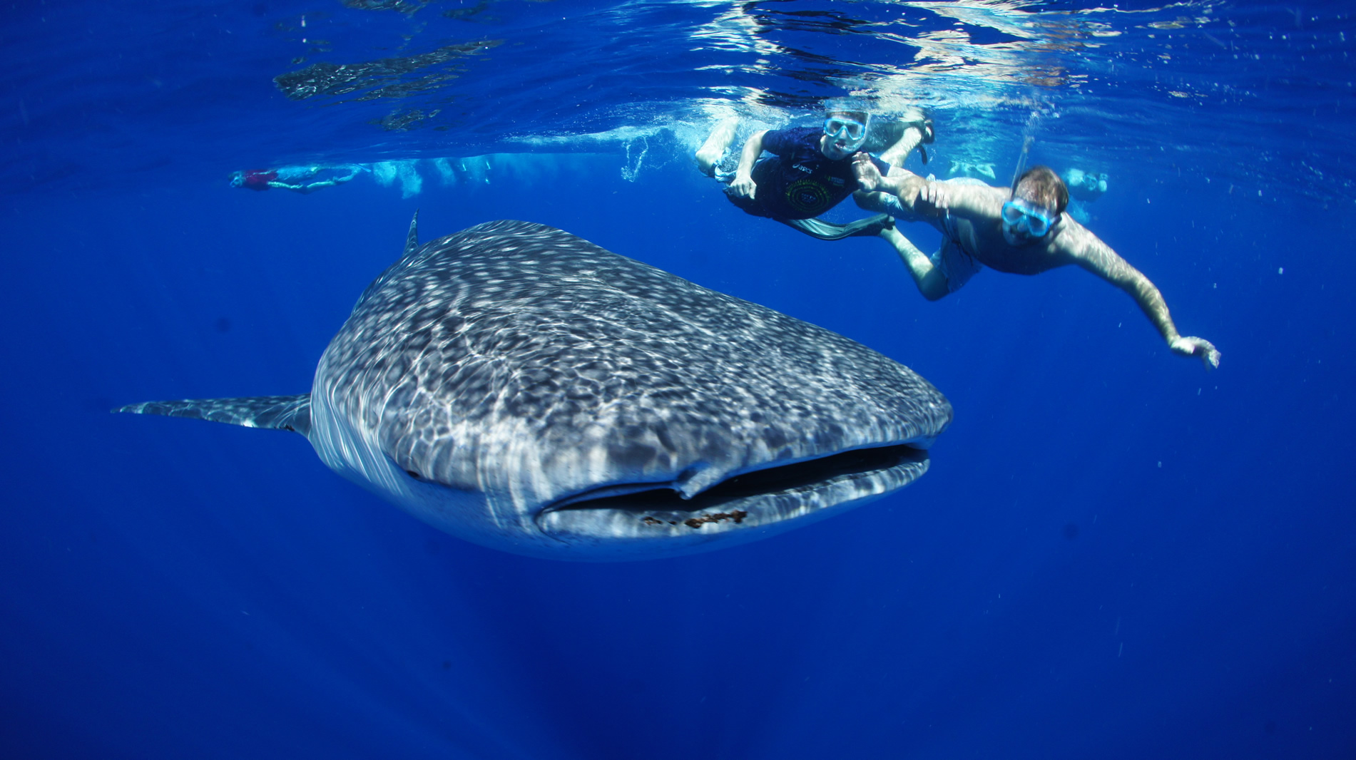 Whale Shark Spotting | Diani beach Kenya 1