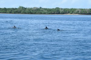 Dolphins of Wasini 2