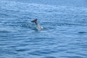 Dolphins of Wasini 1