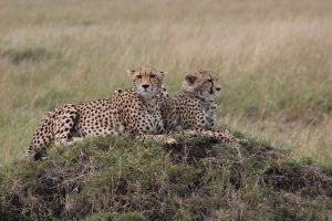 5 profound reasons to visit Kenya 3